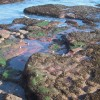 Rocks below Hollicombe Head