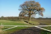 Ditch between fields