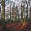 Late afternoon sunshine in Bostall Woods