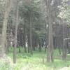 Shields Wood