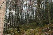 Woodland near Bacan Daraich