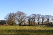 Field at Pednor