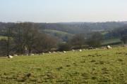 Pasture, Pednor