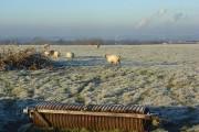 Pasture, Ewelme