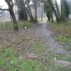 A murky December morning in Shalford Park