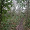 Barton Common, woodland