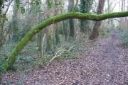 Merrow Common