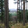 View through the pine trees at Gallows Hill