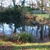 The pond in front of the Priest's Cottage, Mayfield Lane