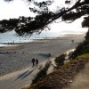 Christchurch: tree overhanging beach view