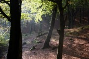 Tandle Hill Country  Park Woods Royton