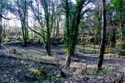 Woodland , Warmwell Heath