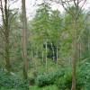 Hestercombe waterfall