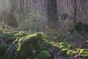 Larkrigg Spring