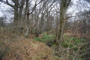 Small stream & woodland, South of Stonegate Station