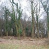 Forestry management on the edge of Wyland Wood