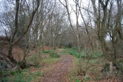 A small coppiced woodland near Darvell