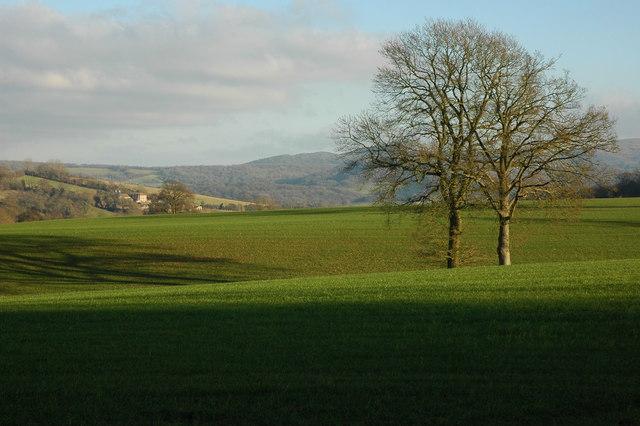 Trees on Hill Farm, near Ridgeway Cross