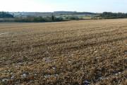 Stubble near Sapperton