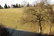 Farmland in Herefordshire