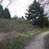 Path at Toton