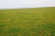 Pasture near Bankhead