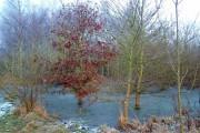 Frozen pond in Pound Farm Wood