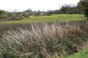 Near the footpath to a farm, east of Prestbury