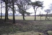 Small woodland, Fauldhouse