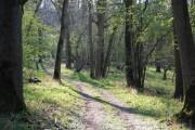 Wytham Great Wood
