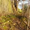 Attenborough Nature Reserve Path
