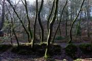 Durford Wood