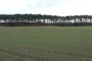 Plantation near Newton Hurst Farm