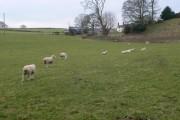Garreg Farm
