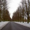 Limetree Avenue in Clumber Park