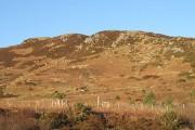 Young woodland beneath Maol Beag