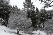 Woodland, near Gordonbush