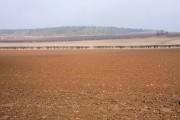 Farmland at Fornham All Saints