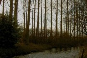 Trees along the bank of the River Ryton
