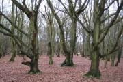 Horley: Riverside Garden Park