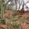Grim's Ditch in High Scrubs Wood