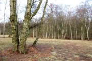 Clearing with Silver Birch on Pitstone Common