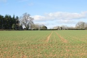 Cropfield at Ladyridge