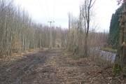 Cleared Woodland alongside Lenham Road
