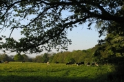 Fordingbridge farmland