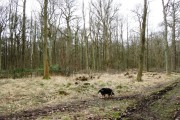 A Recently Created Woodland Clearing at Ashridge