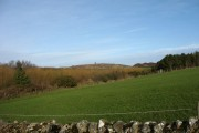 View across pastureland and coverts towards Mynydd Parys