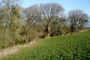 Woodland, near Sutton Farm
