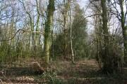 Cottage Plantation, Burland