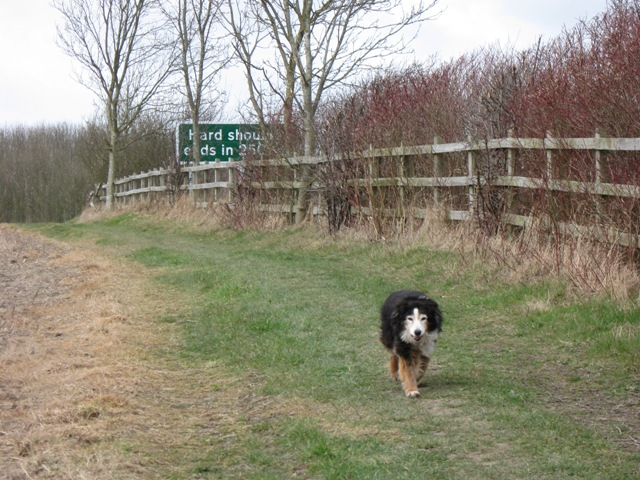 Path diverted by the Tring Bypass